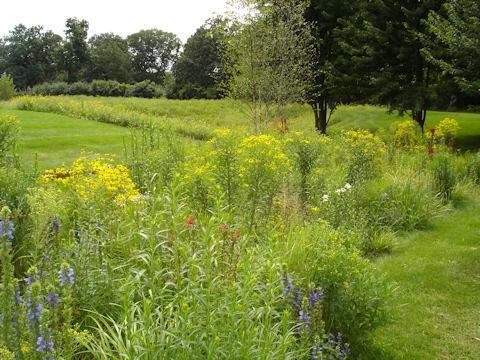 Native plants in restored detention basin