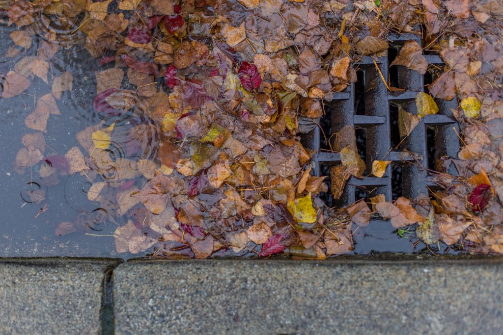 Leaves and yard debris in storm drains
