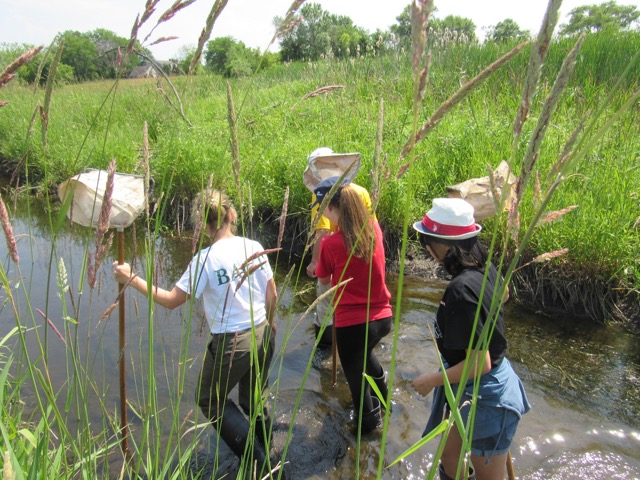 Picture shows 5 interns walking in the river, assessing water quality