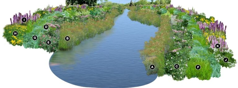 Native planting Stream Buffer View