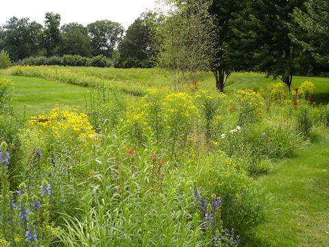 Native plants in restored detention basin